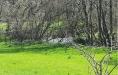 West Down Farm